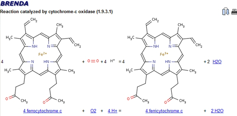 cytochrome-c oxidase catalyzed reaction