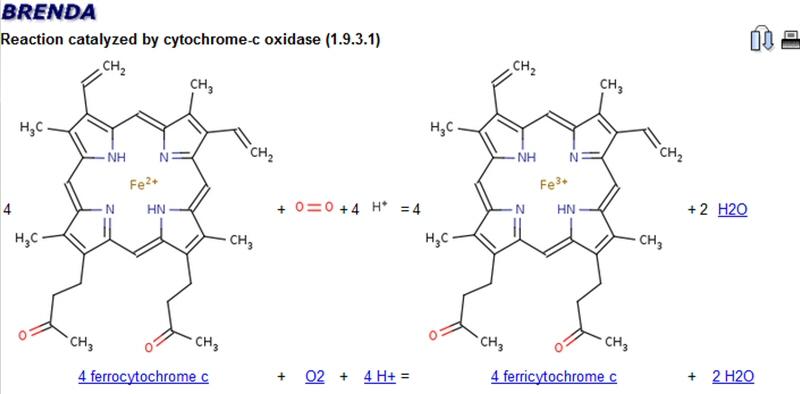 cytochrome-c oxidase catalyzed reaction