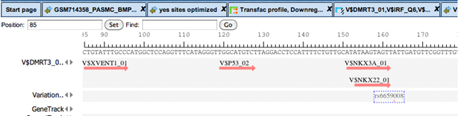 transfac_gXp-3_small